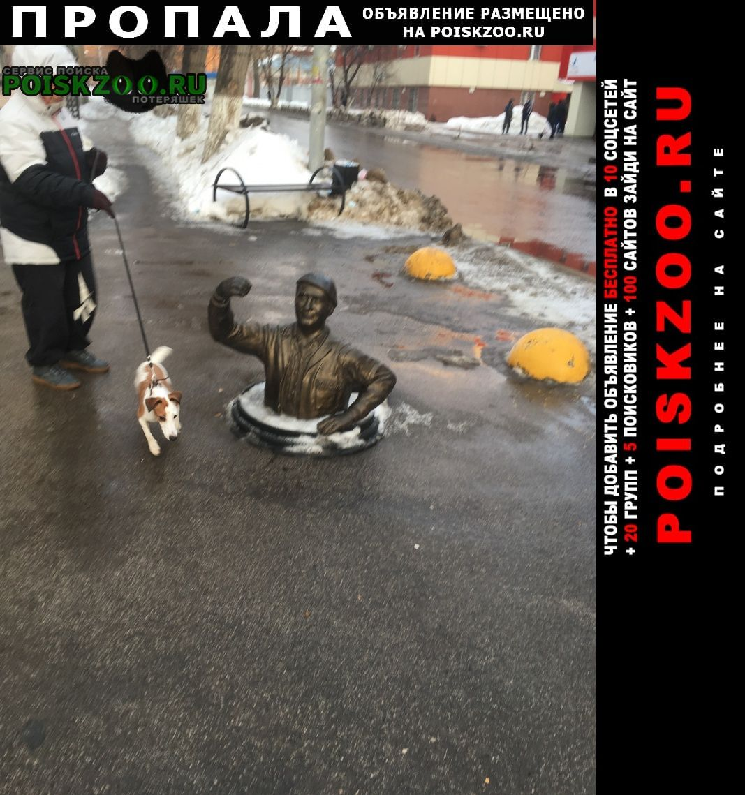 Пропала собака Саратов