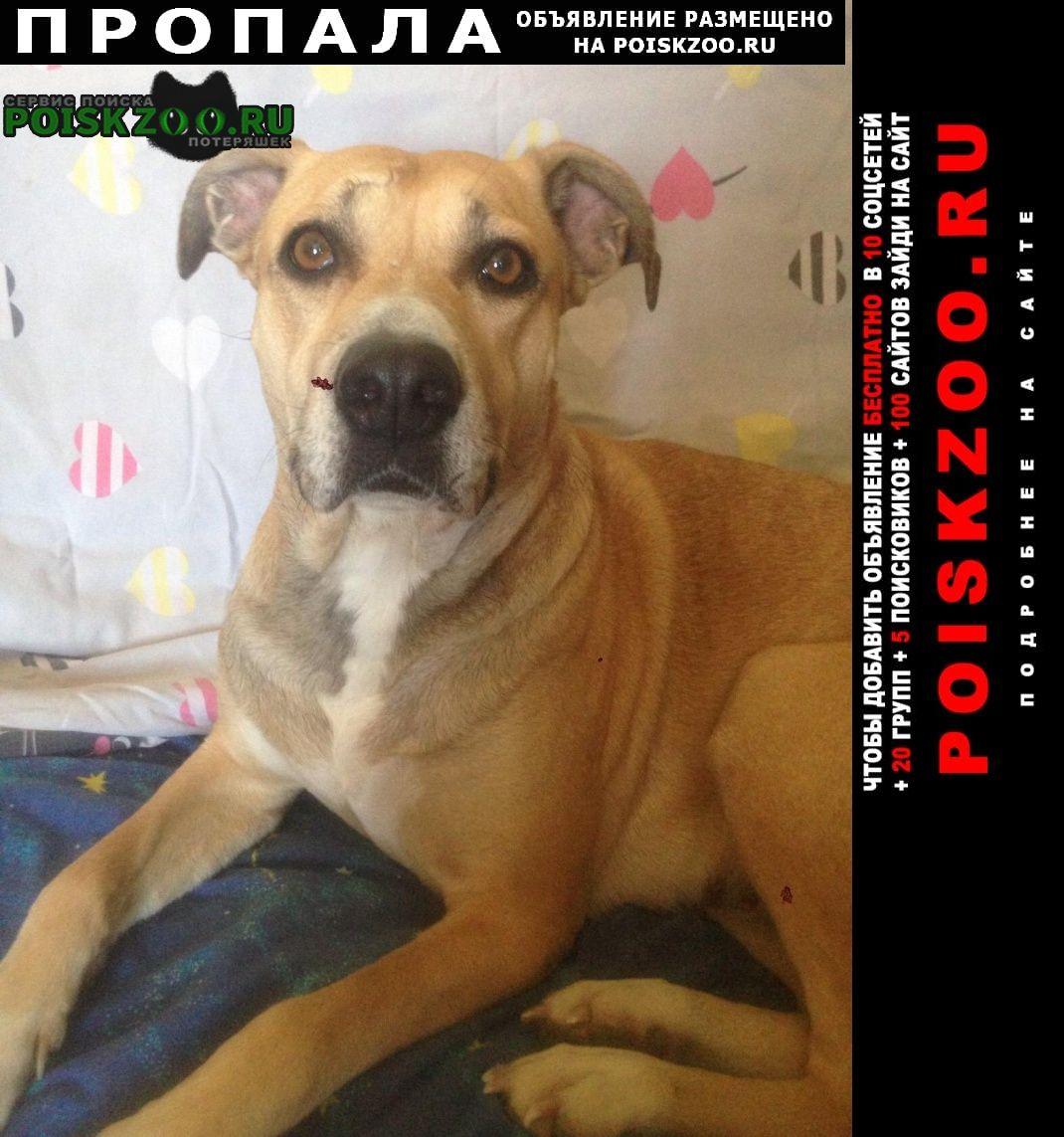 Оренбург Пропала собака объявление