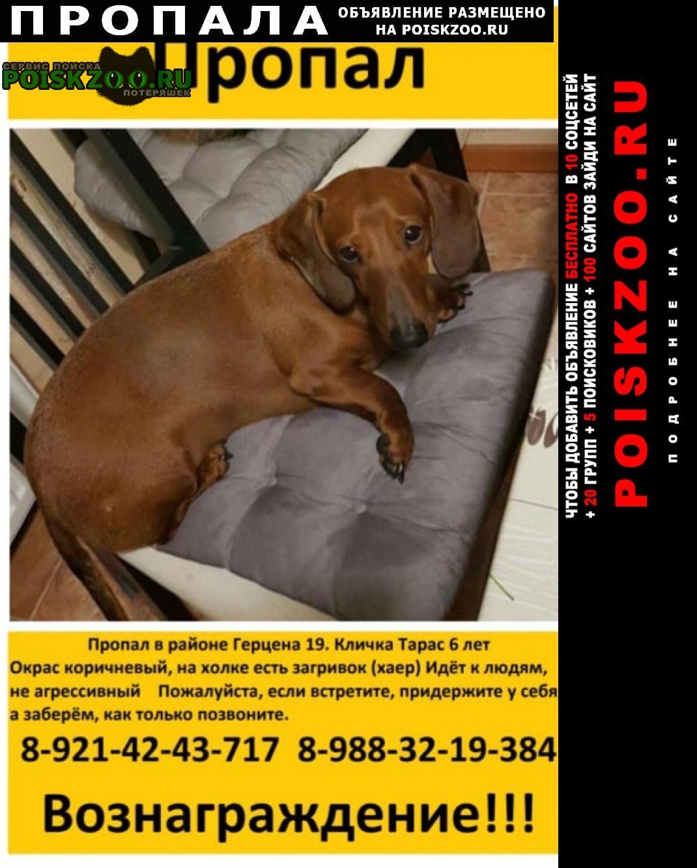 Пропала собака помогите найти друга Новороссийск