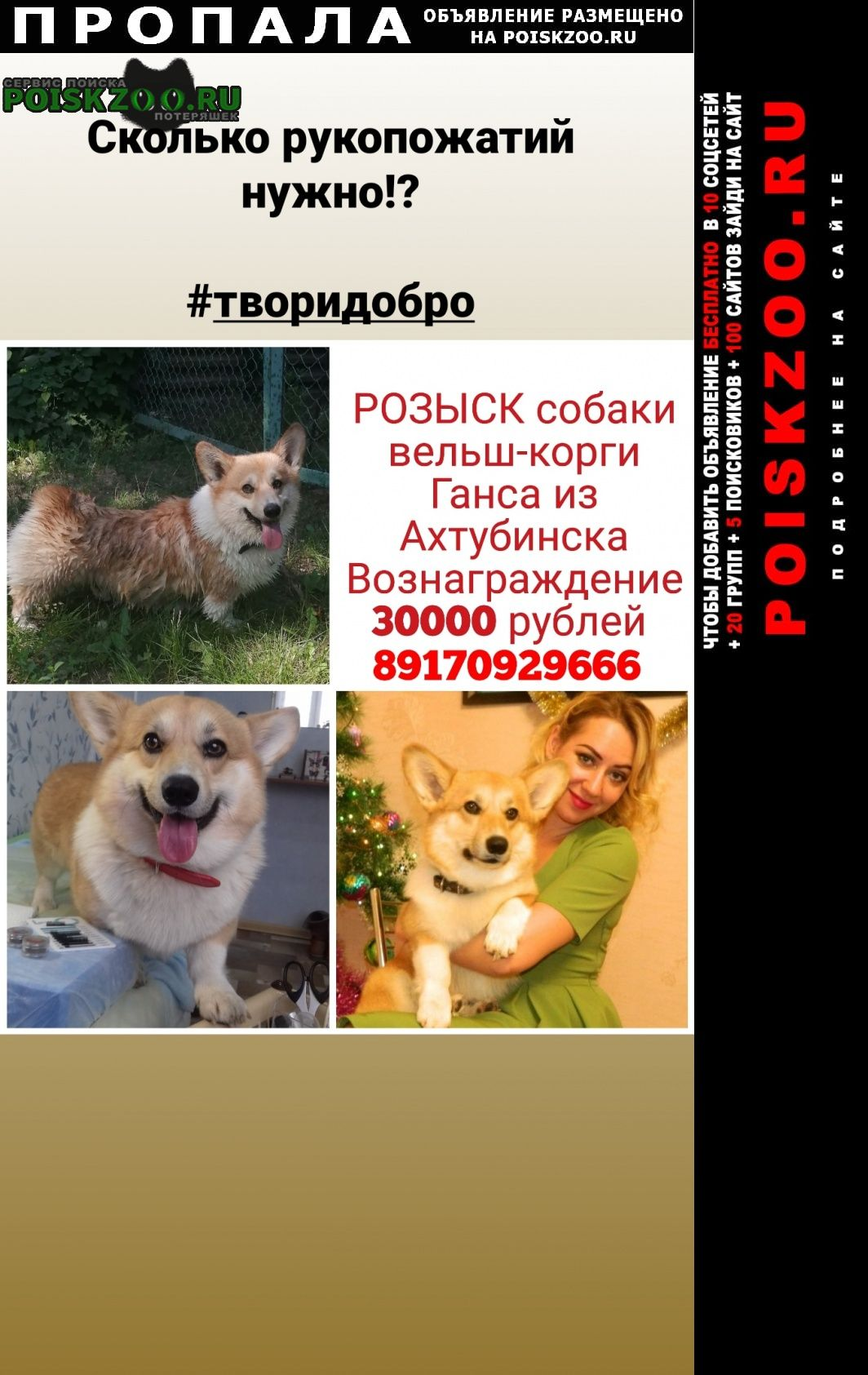 Ахтубинск Пропала собака вельш-корги