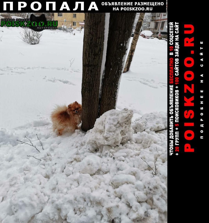 Пропала собака Череповец