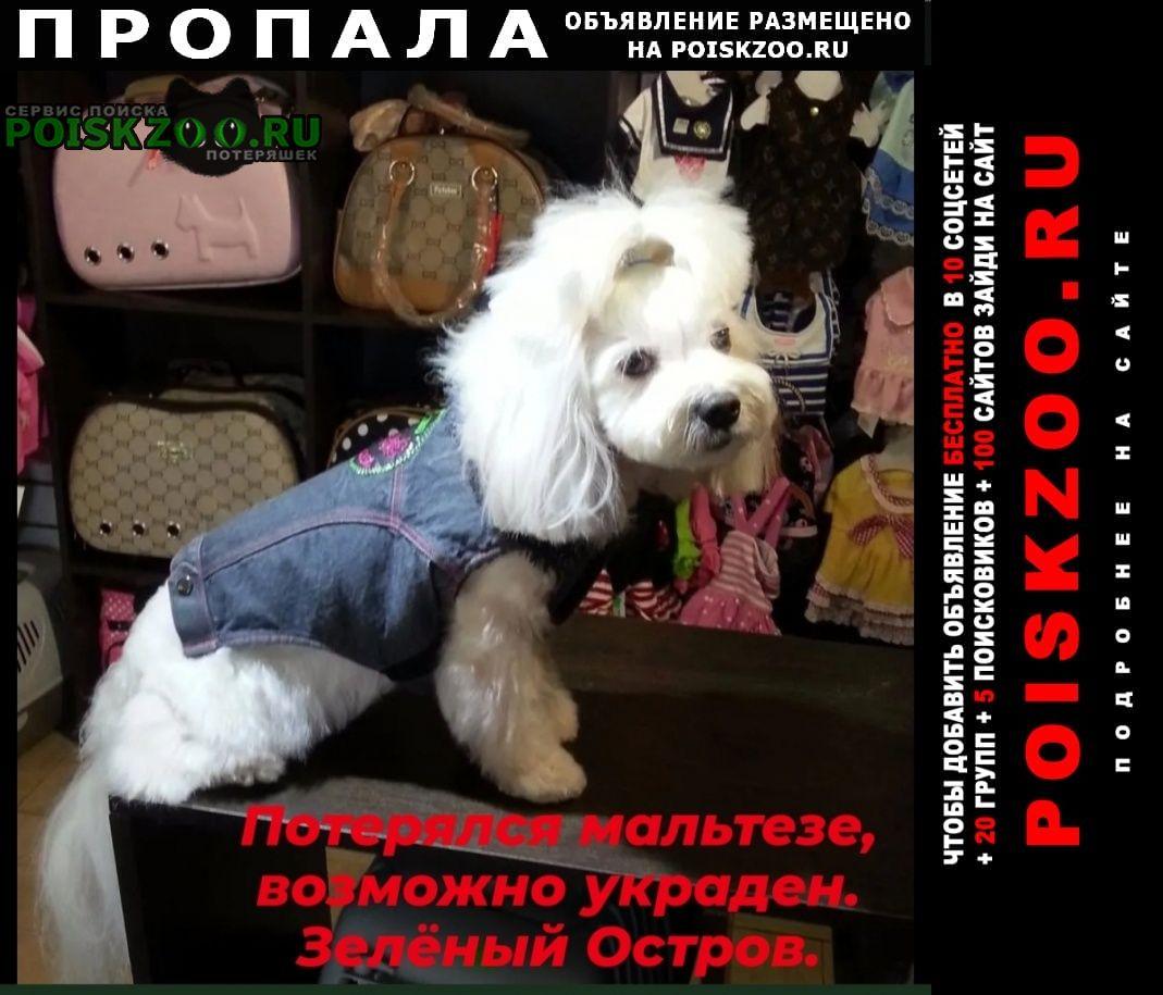 Пропала собака мальтезе, возможно украден Омск