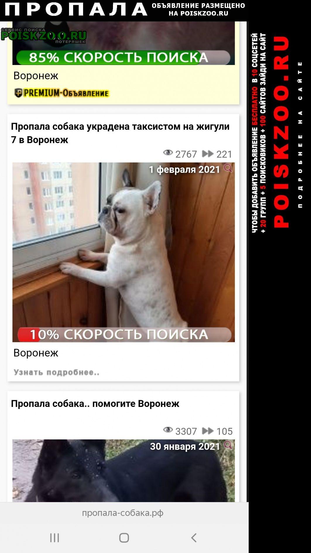 Пропала собака украден французкий бульдог Воронеж