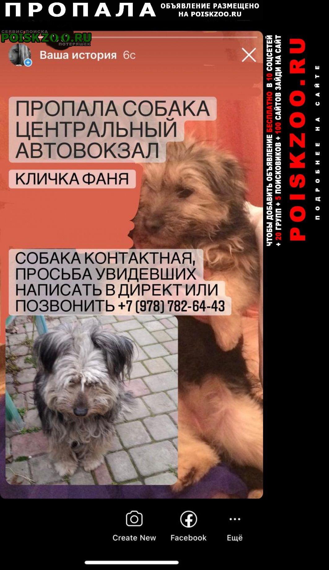 Пропала собака район автовокзала Симферополь