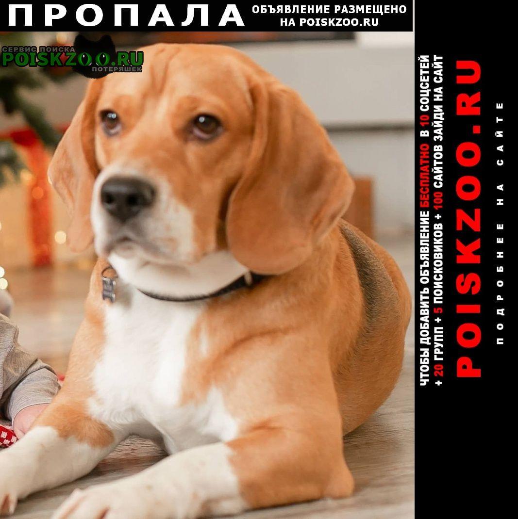 Пропала собака вознаграждение 20 000 р. Москва