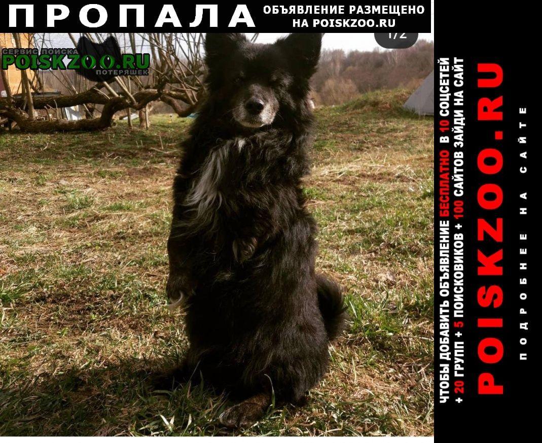 Калуга Пропала собака