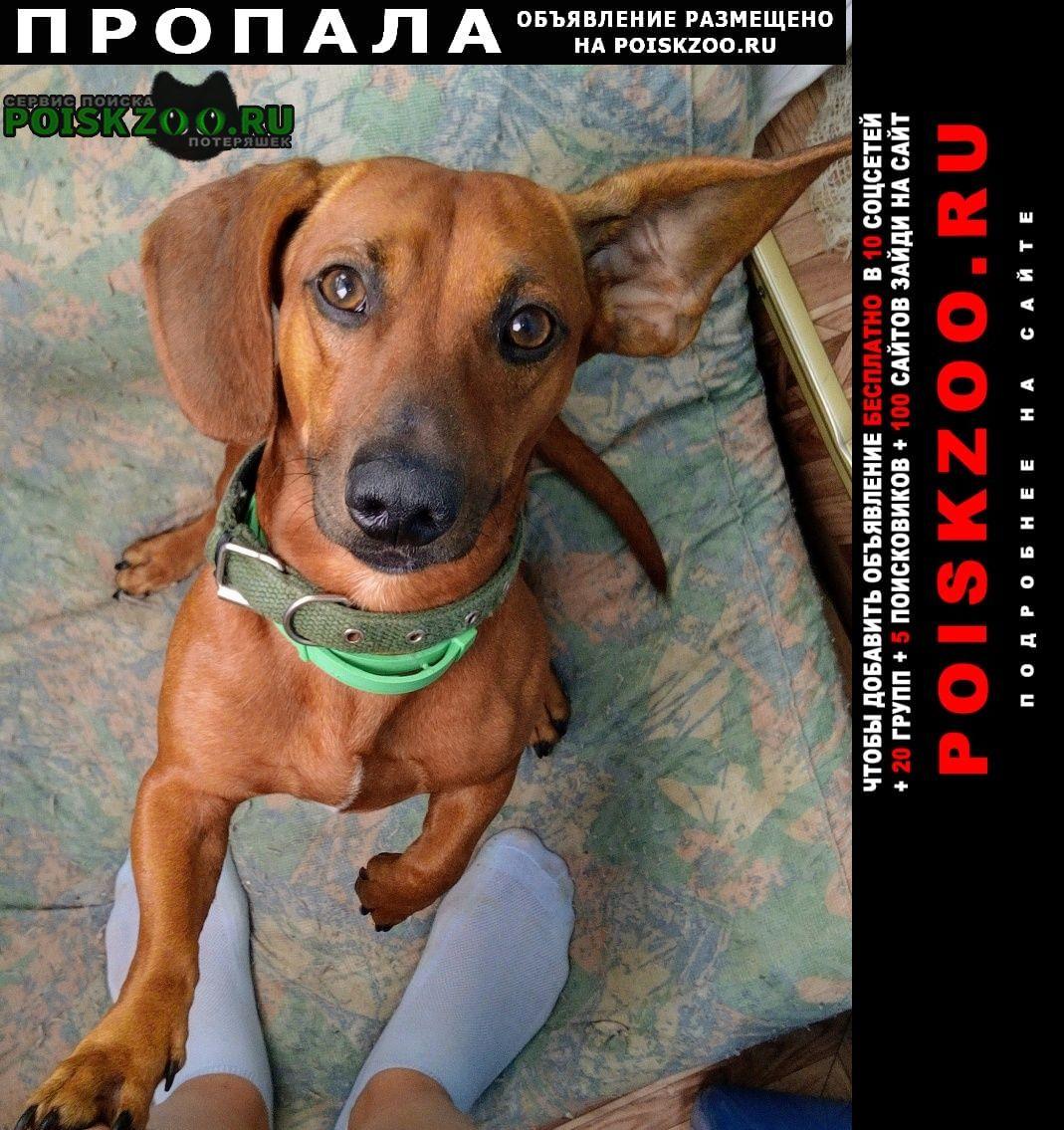 Пропала собака такса Севастополь