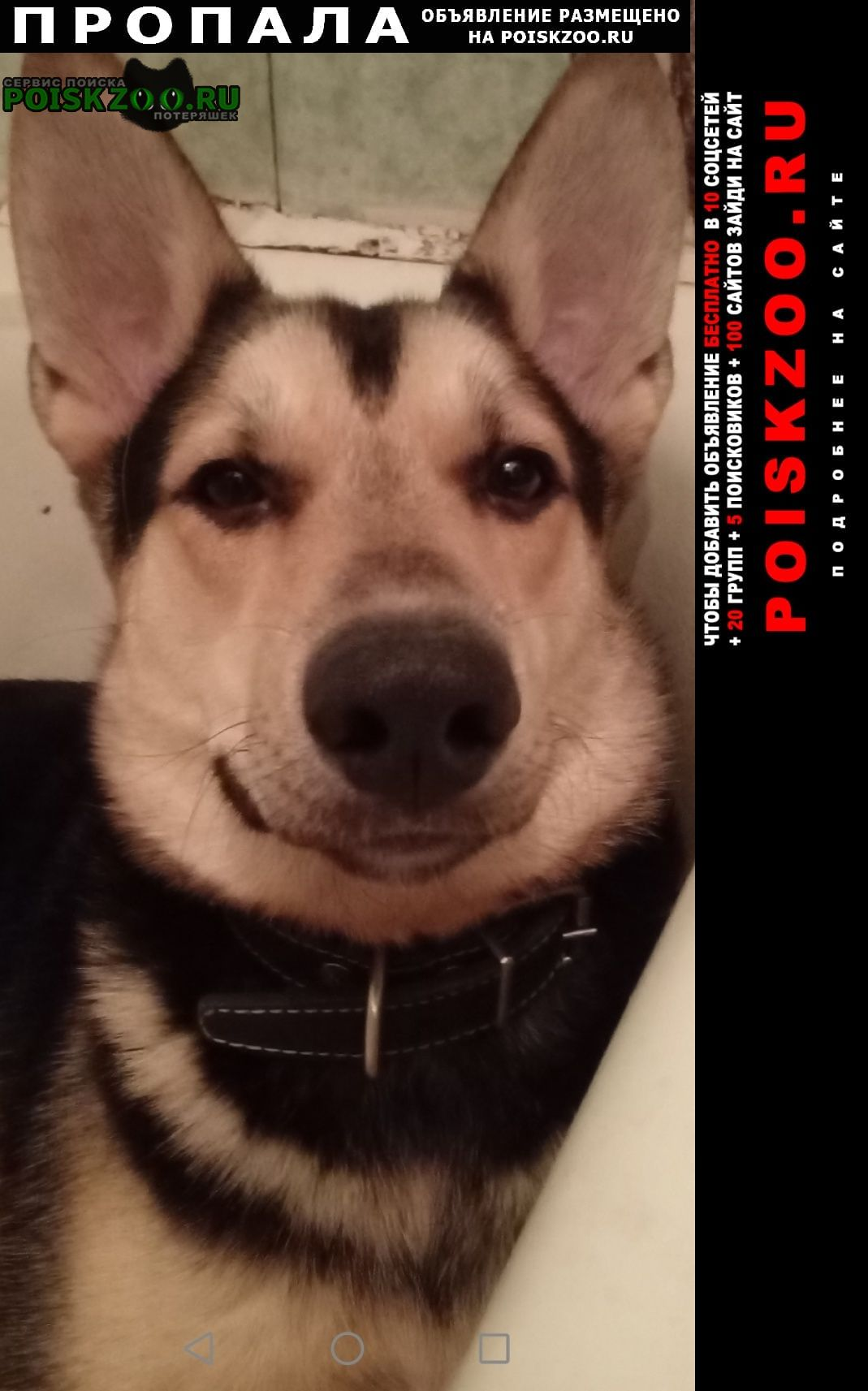 Пропала собака помогите пожалуйста найти Пенза