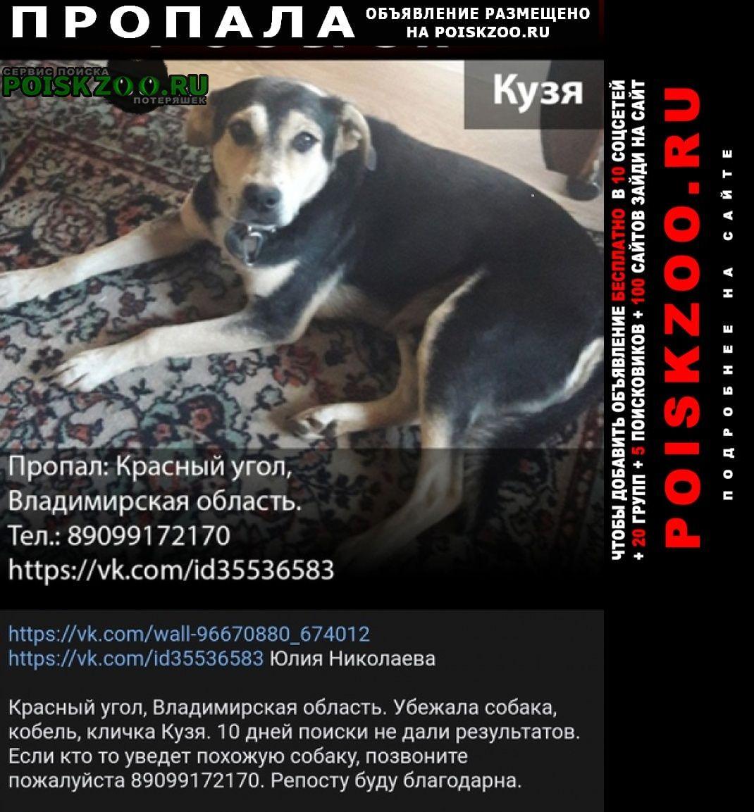 Киржач Пропала собака пожалуйста помогите с поиском