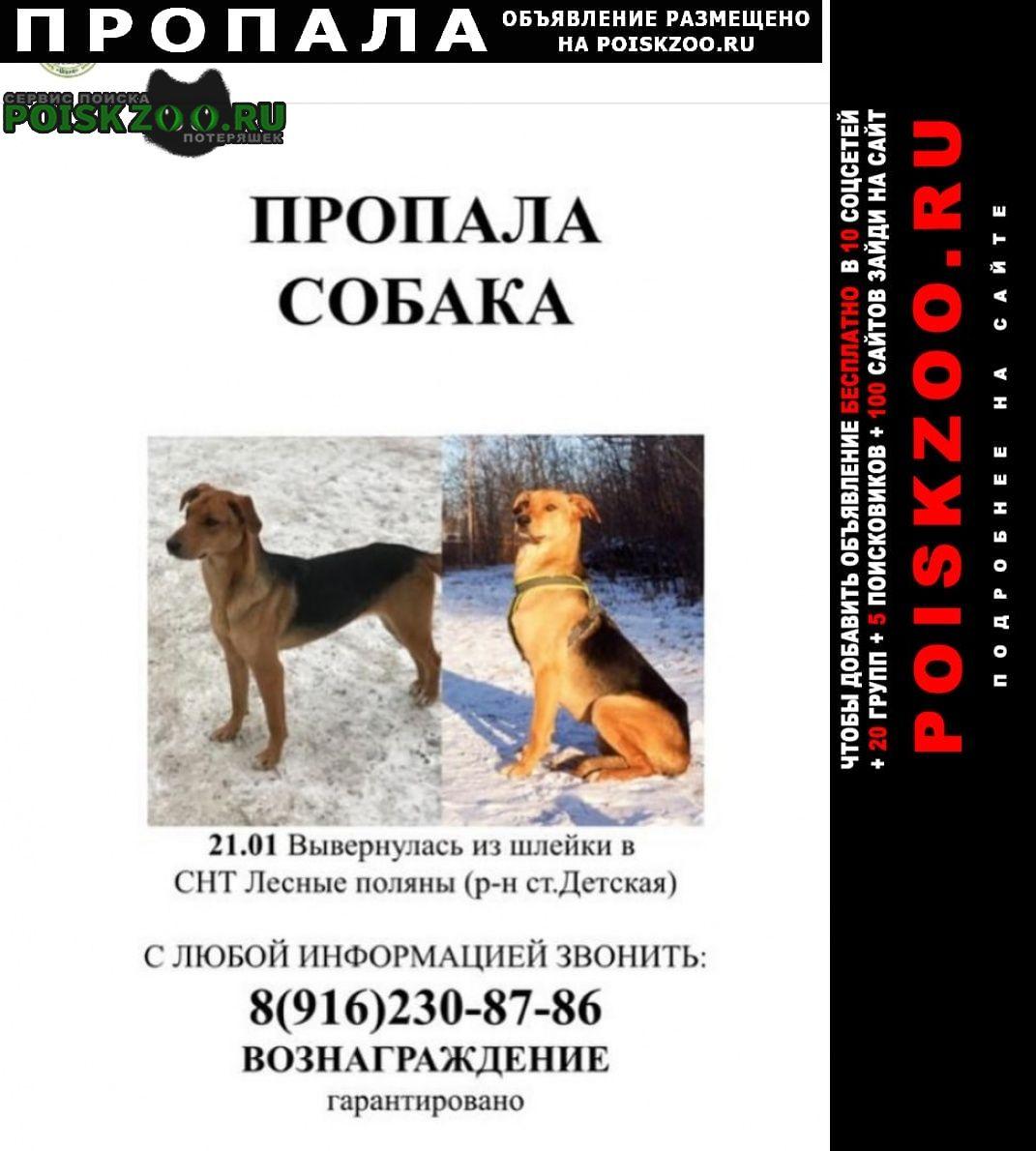 Пропала собака Ивантеевка (Московская обл.)