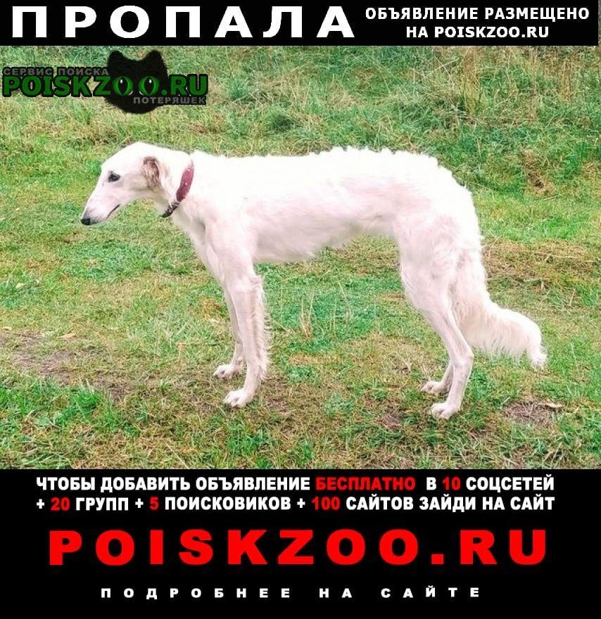 Пропала собака Волхов