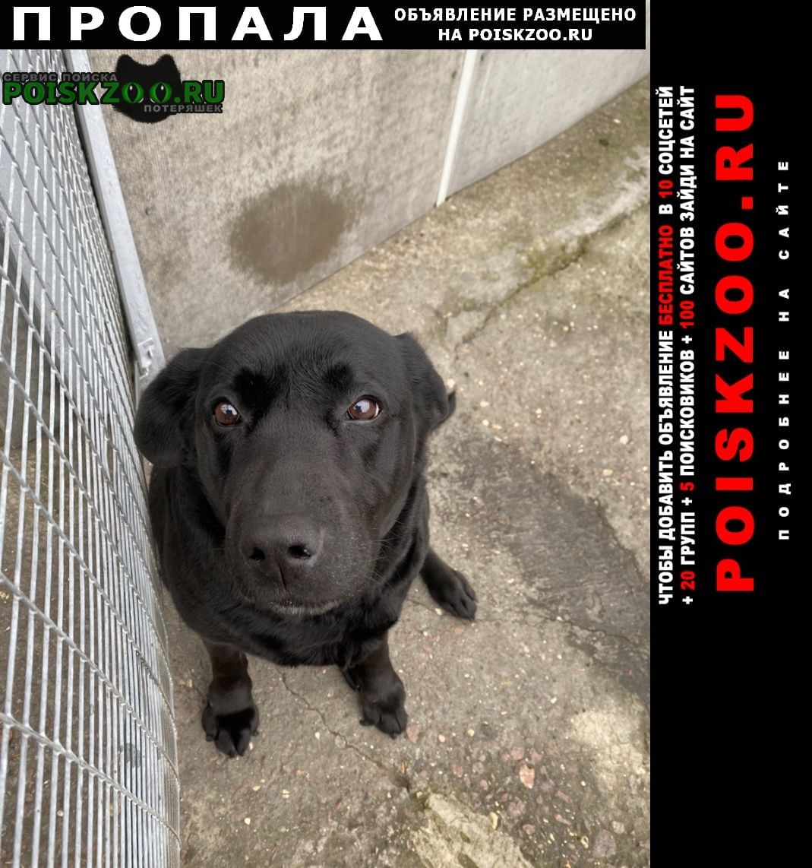 Пропала собака чёрная лабрадор Симферополь
