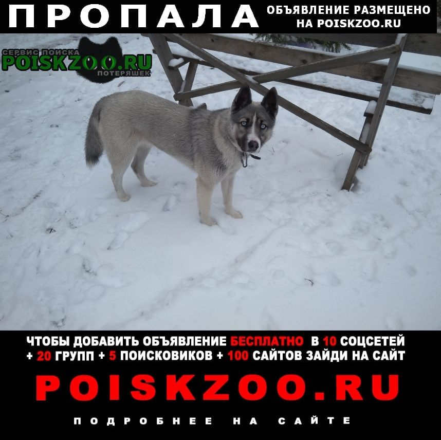Пропала собака в е в районе гуторовских улиц Курск
