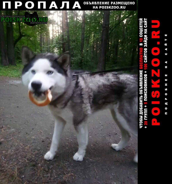 Екатеринбург Пропала собака