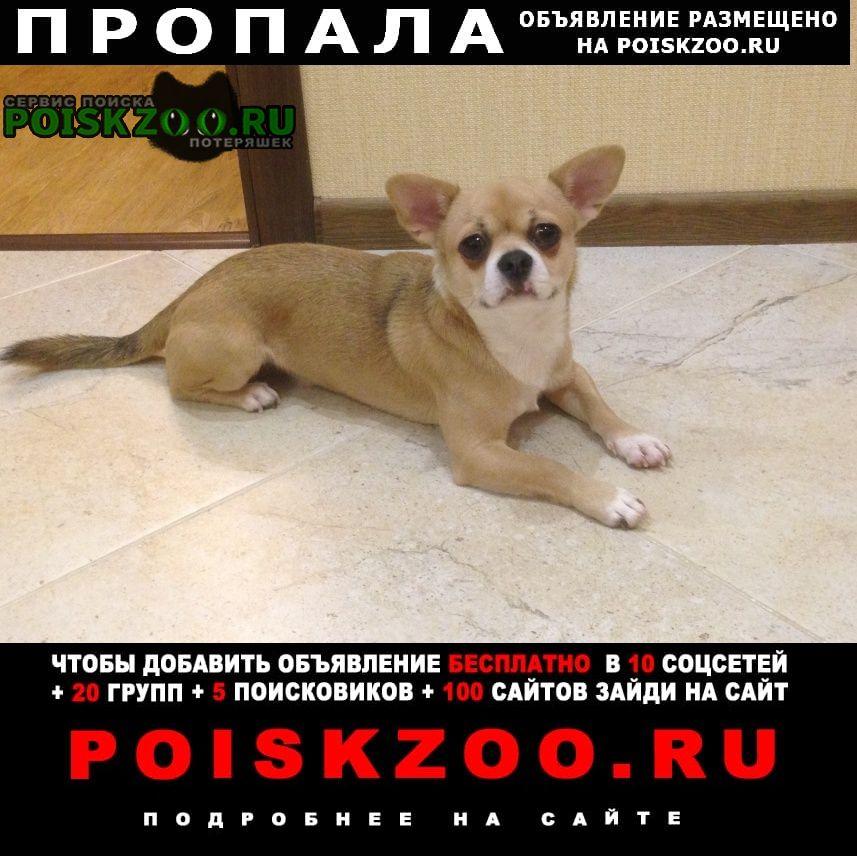 Краснодар Пропала собака чихуахуа