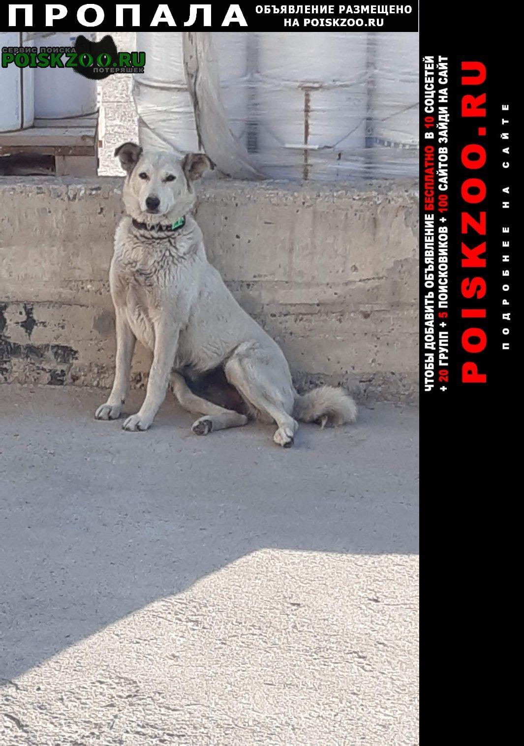Нарофоминск Пропала собака район головкова