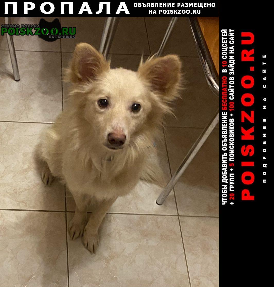 Пропала собака энжи метис Одинцово