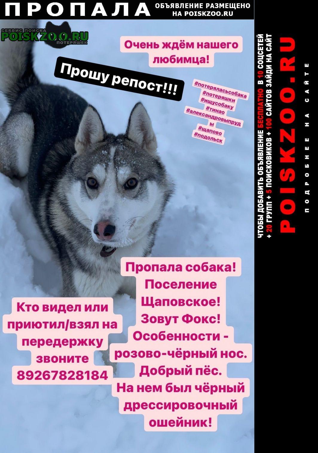 Троицк Пропала собака