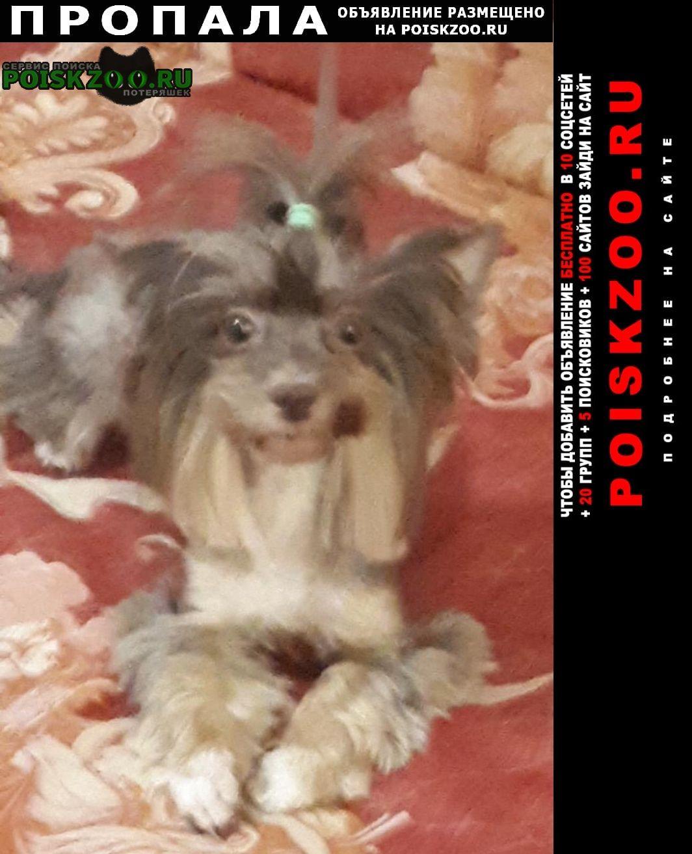 Пропала собака в районе п.отары девочка йорка Казань