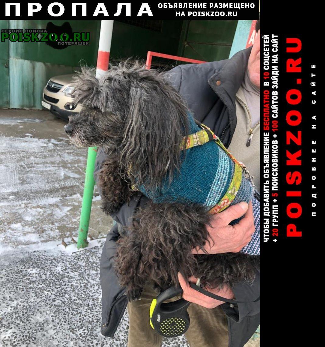 Пропала собака ул. ская, в мгса, рядом с 15-ой бо Реутов