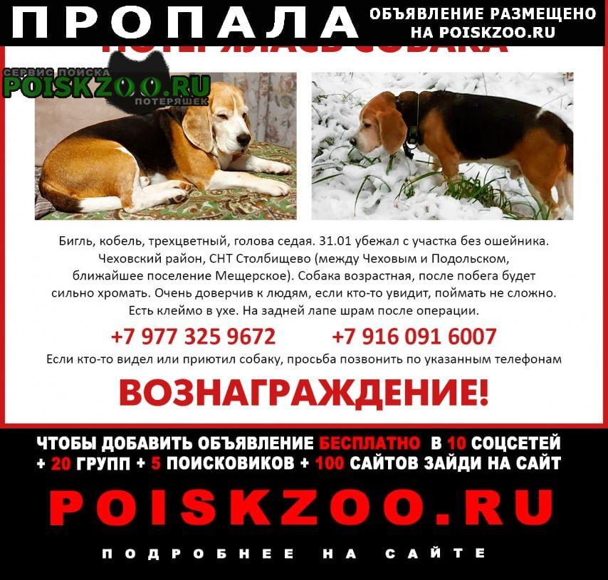 Чехов Пропала собака моск.обл ский р-н, домодедовский р-н