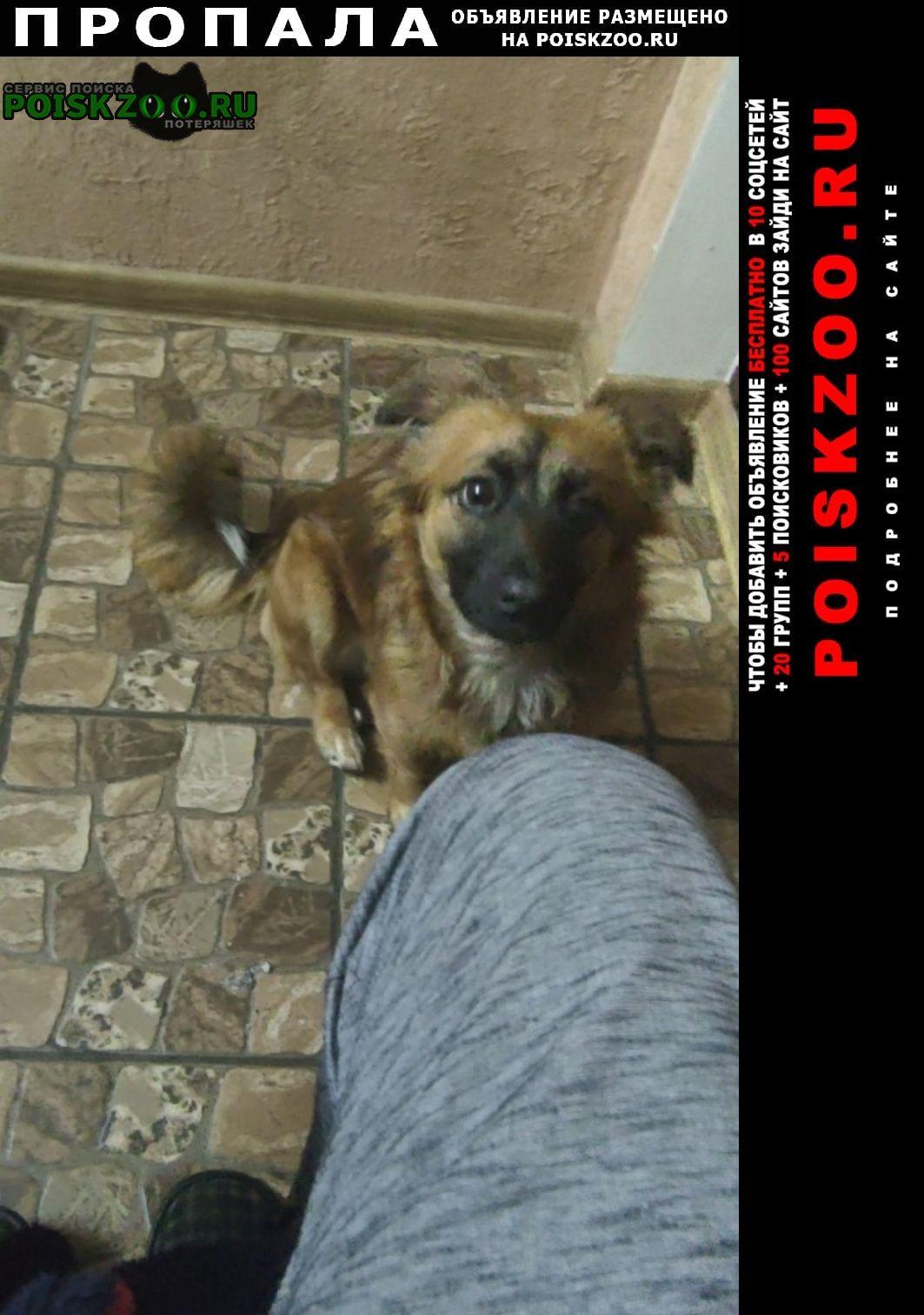 Пропала собака за вознаграждение Херсон