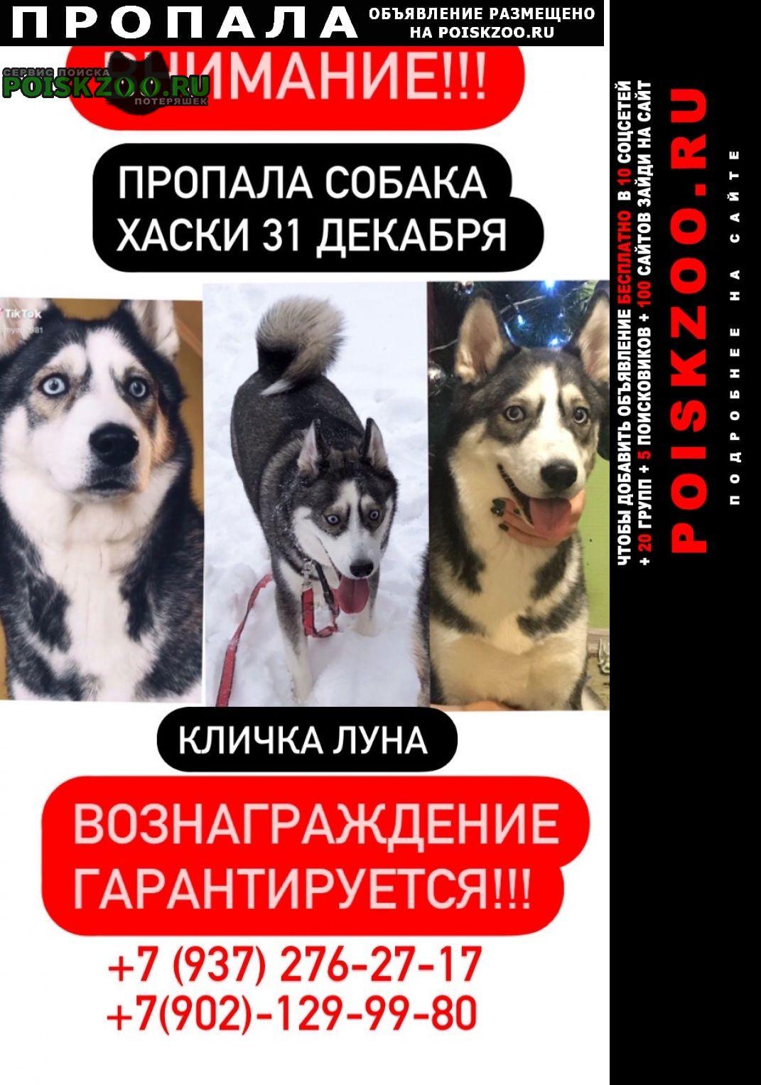 Пропала собака порода хаски Ульяновск