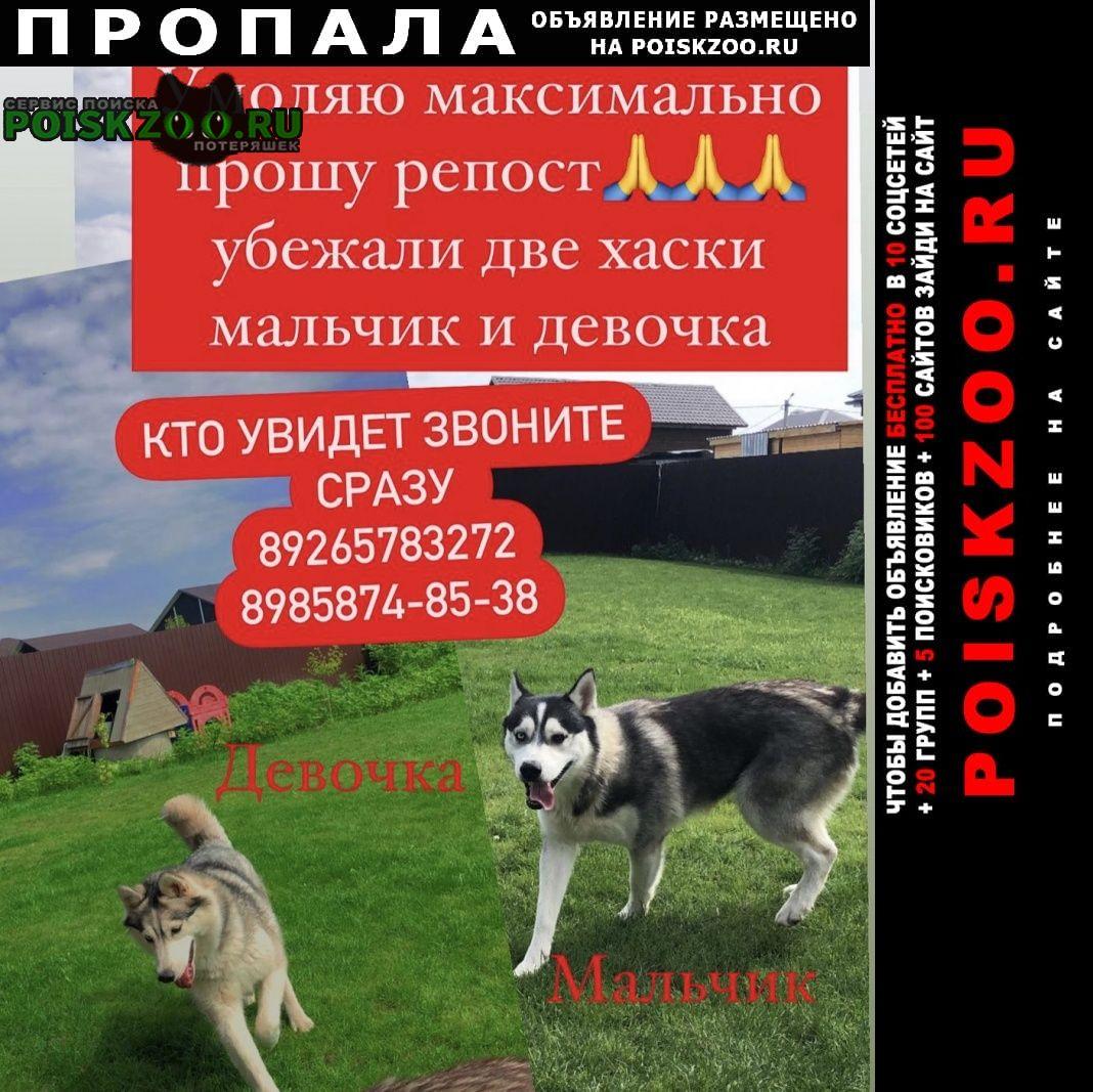 Раменское Пропала собака девочка и мальчик