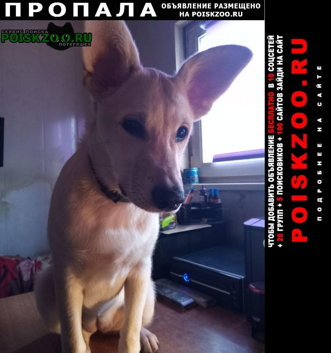 Москва Пропала собака в районе люблино