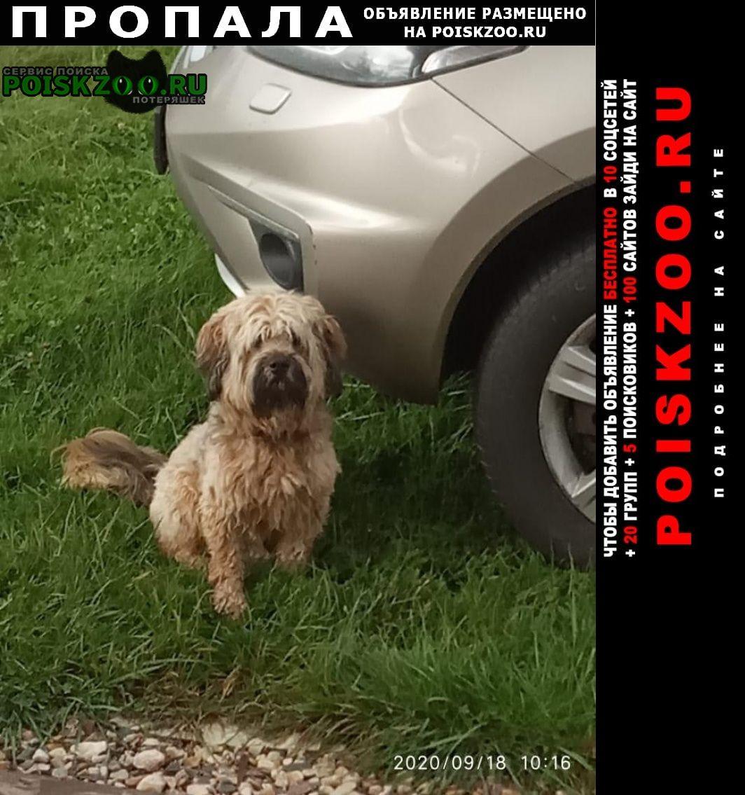 Хотьково Пропала собака