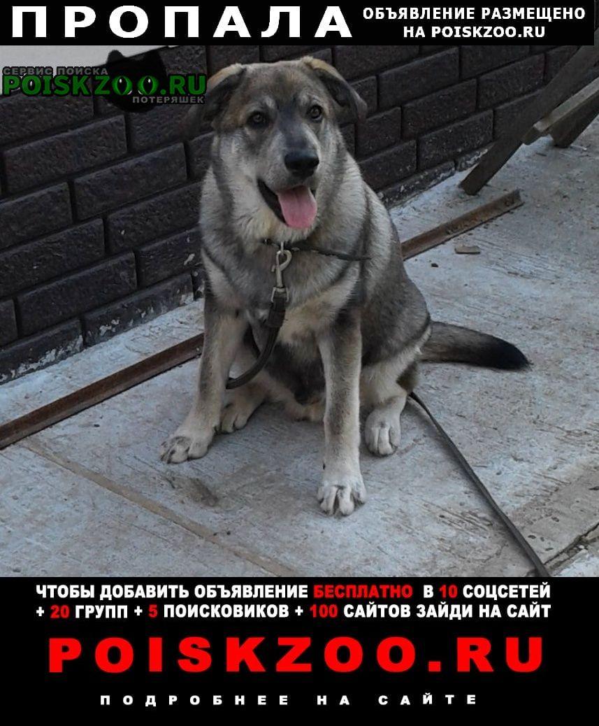 Пропала собака сорвался с ошейника пес 11 мес Нижний Тагил