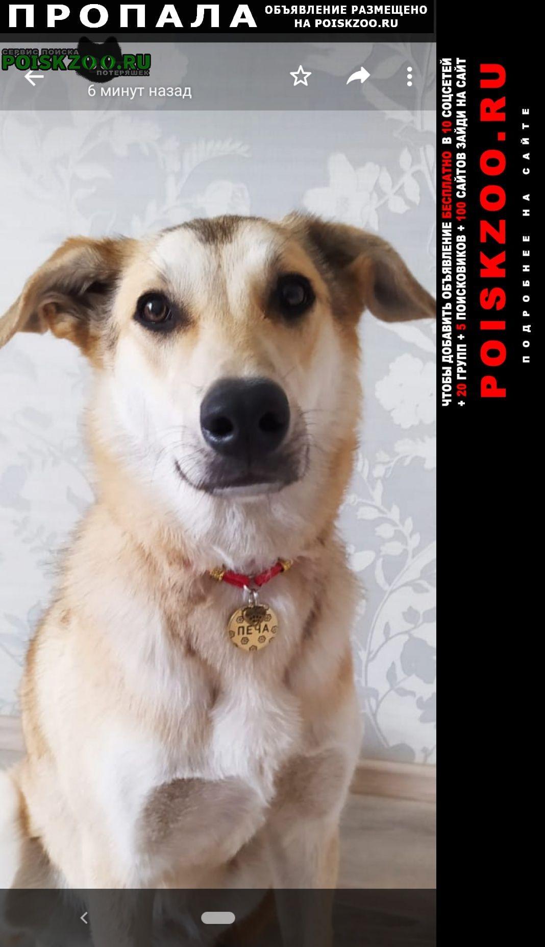 Пропала собака Первоуральск