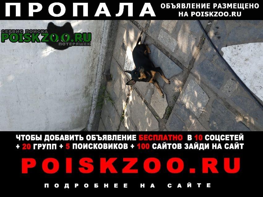 Алматы (Алма-Ата) Пропала собака русский той терьер чёрного цвета