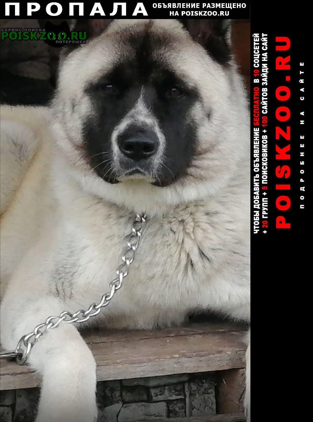 Заволжск Пропала собака