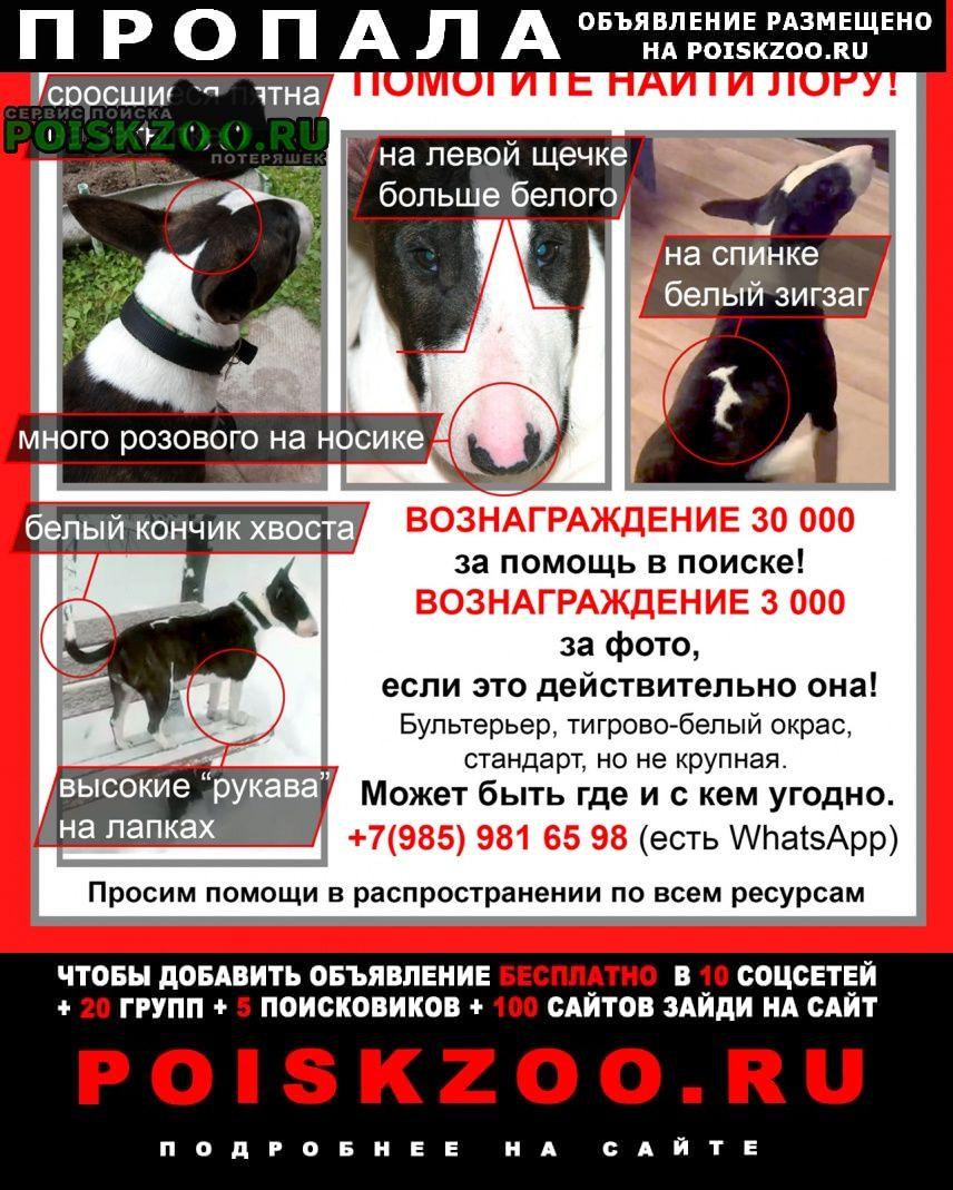 Москва Пропала собака ищем давно, находится у чужих людей
