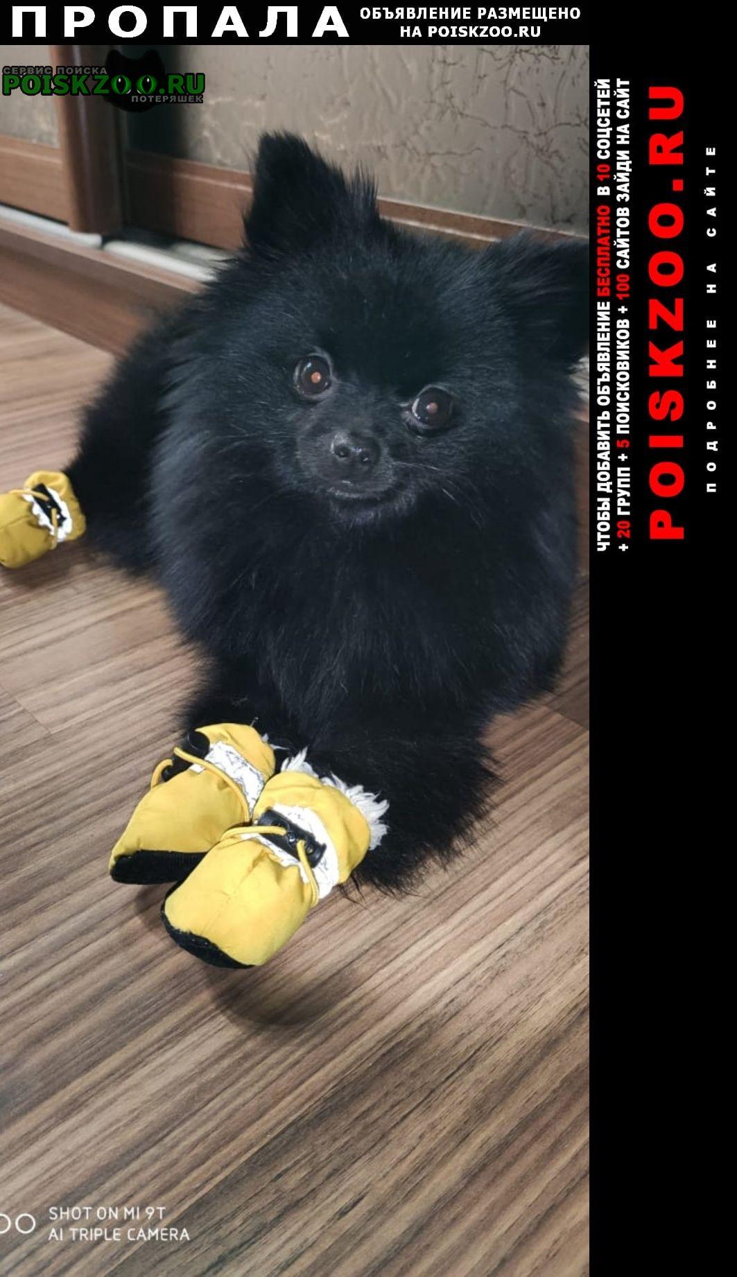 Пропала собака 9 месяцев Москва