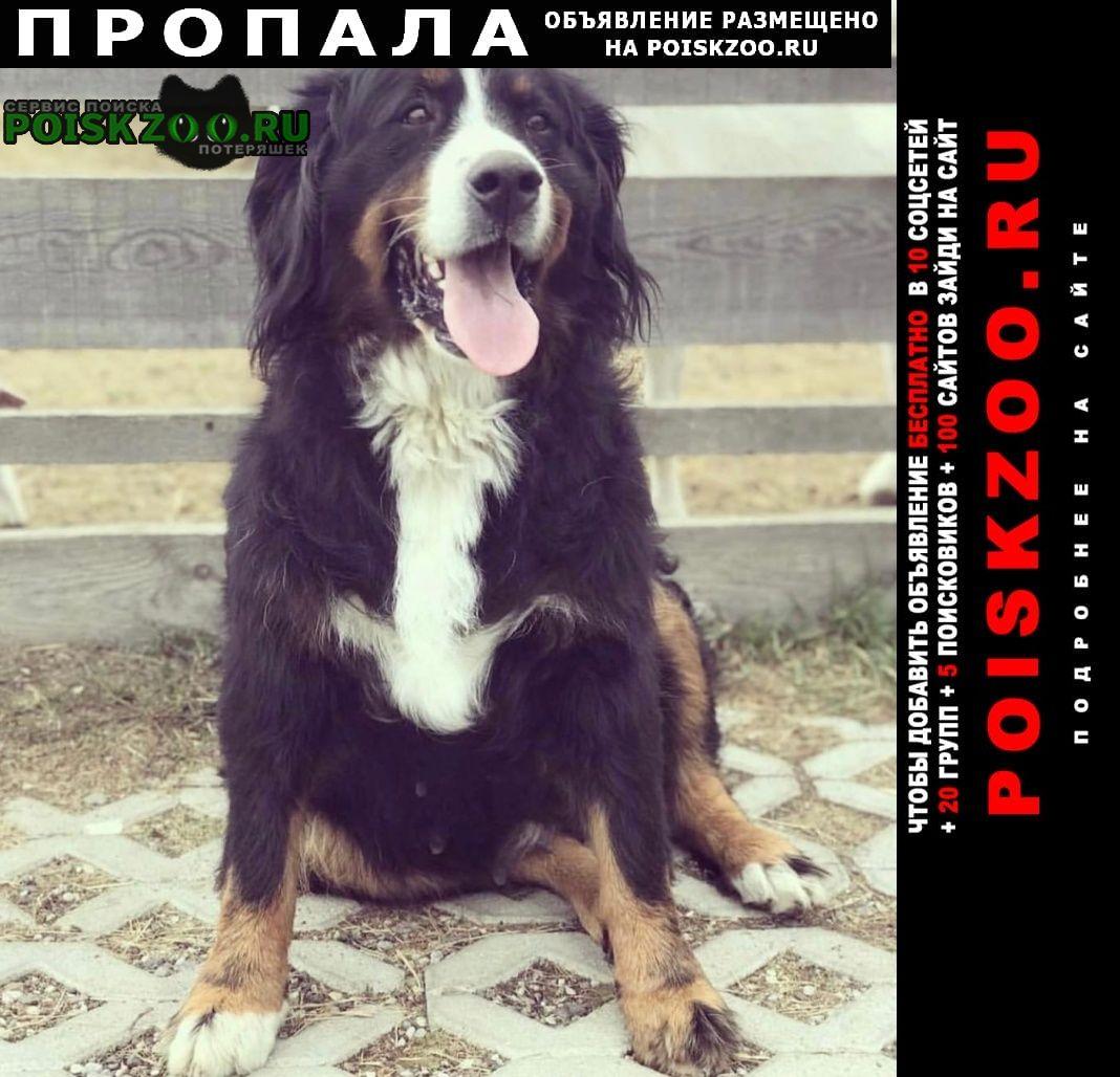 Гурьевск (Калининградская обл.) Пропала собака