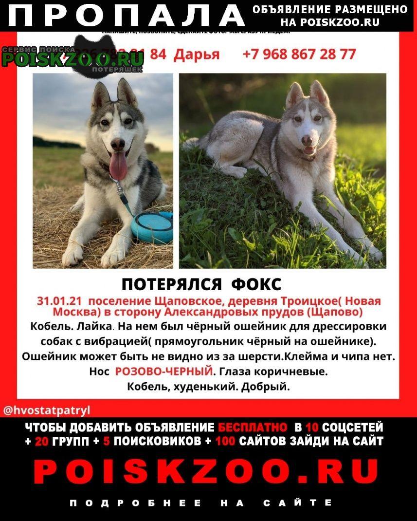 Пропала собака Подольск