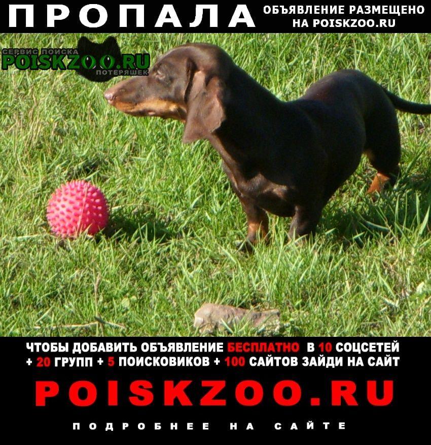 Пропала собака такса Иркутск
