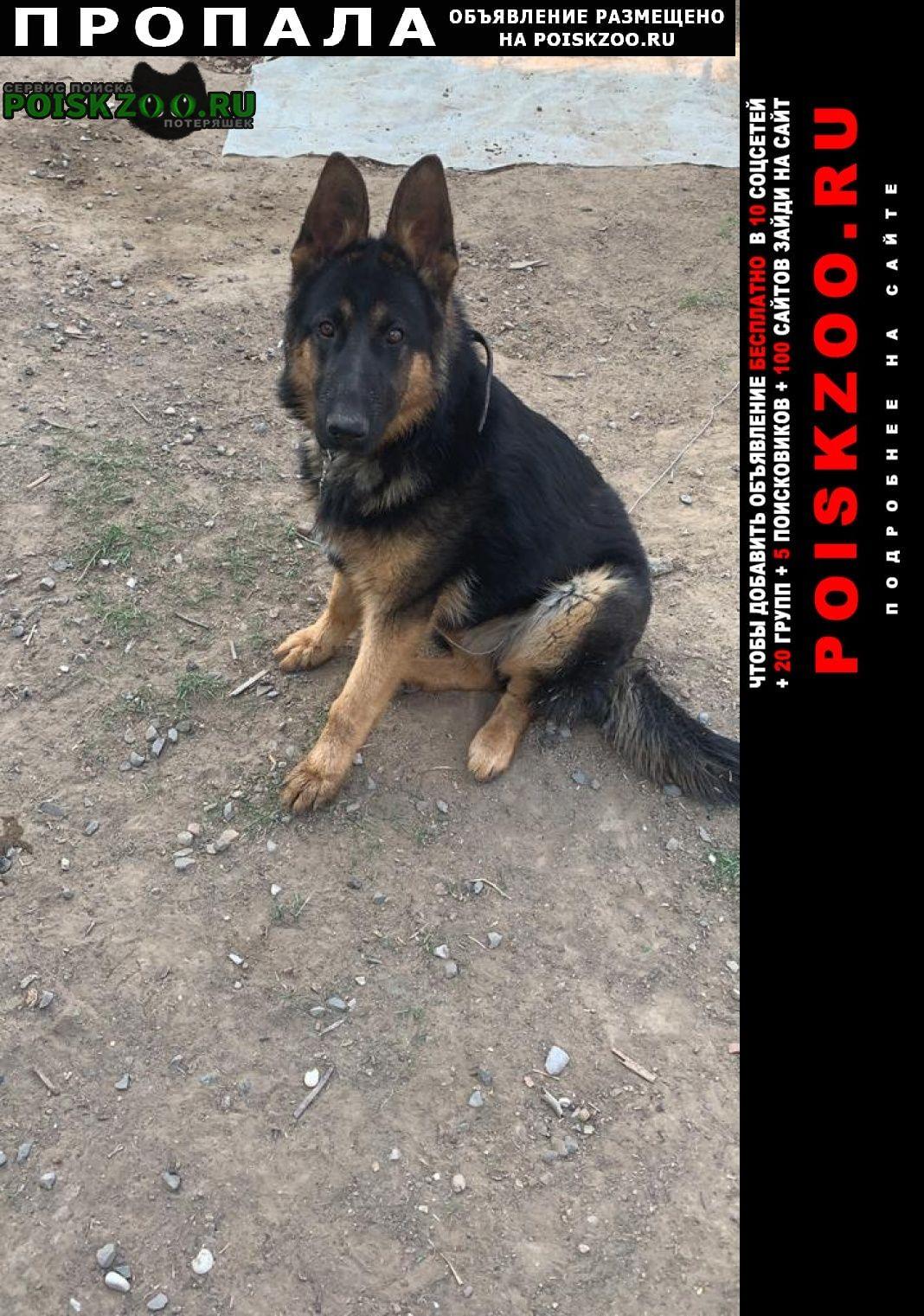 Пропала собака Астрахань