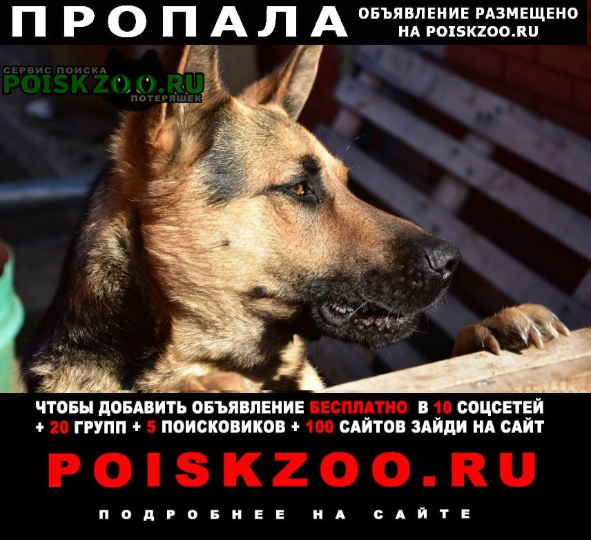 Пропала собака немец Красноярск