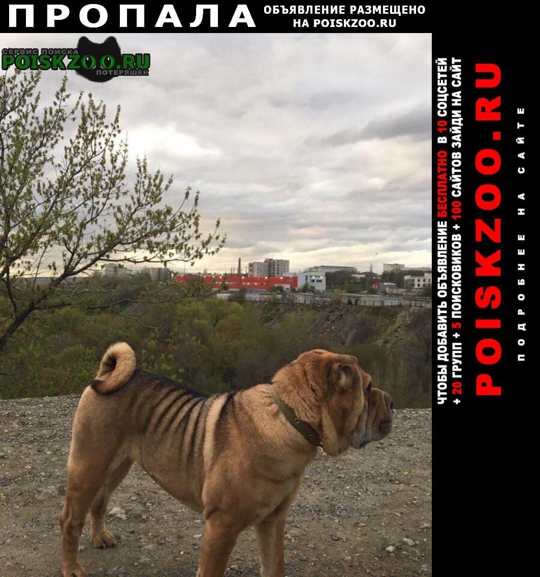 Волгоград Пропала собака породы шарпей