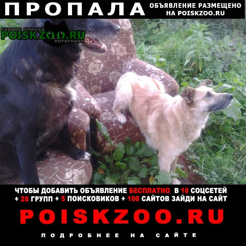 Пропала собака и две собаки Вичуга