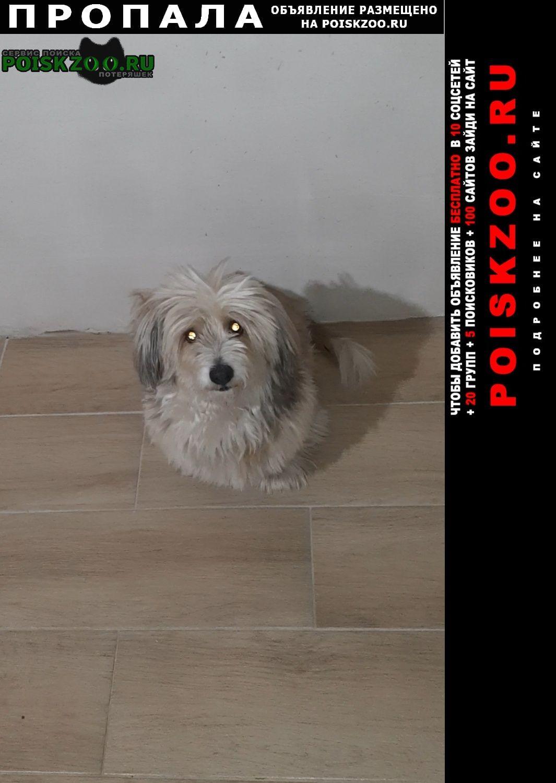 Красный Яр (Самарская обл.) Пропала собака