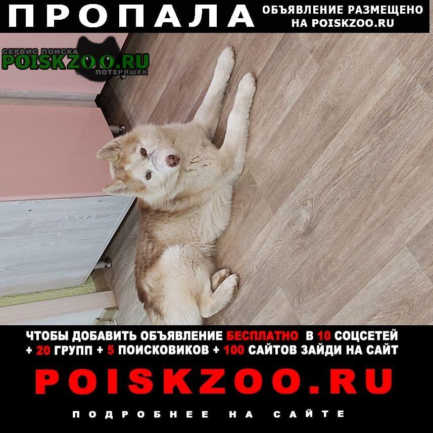 Саратов Пропала собака