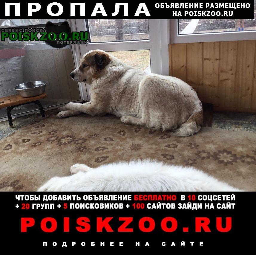 Пропала собака алабай Донецкая
