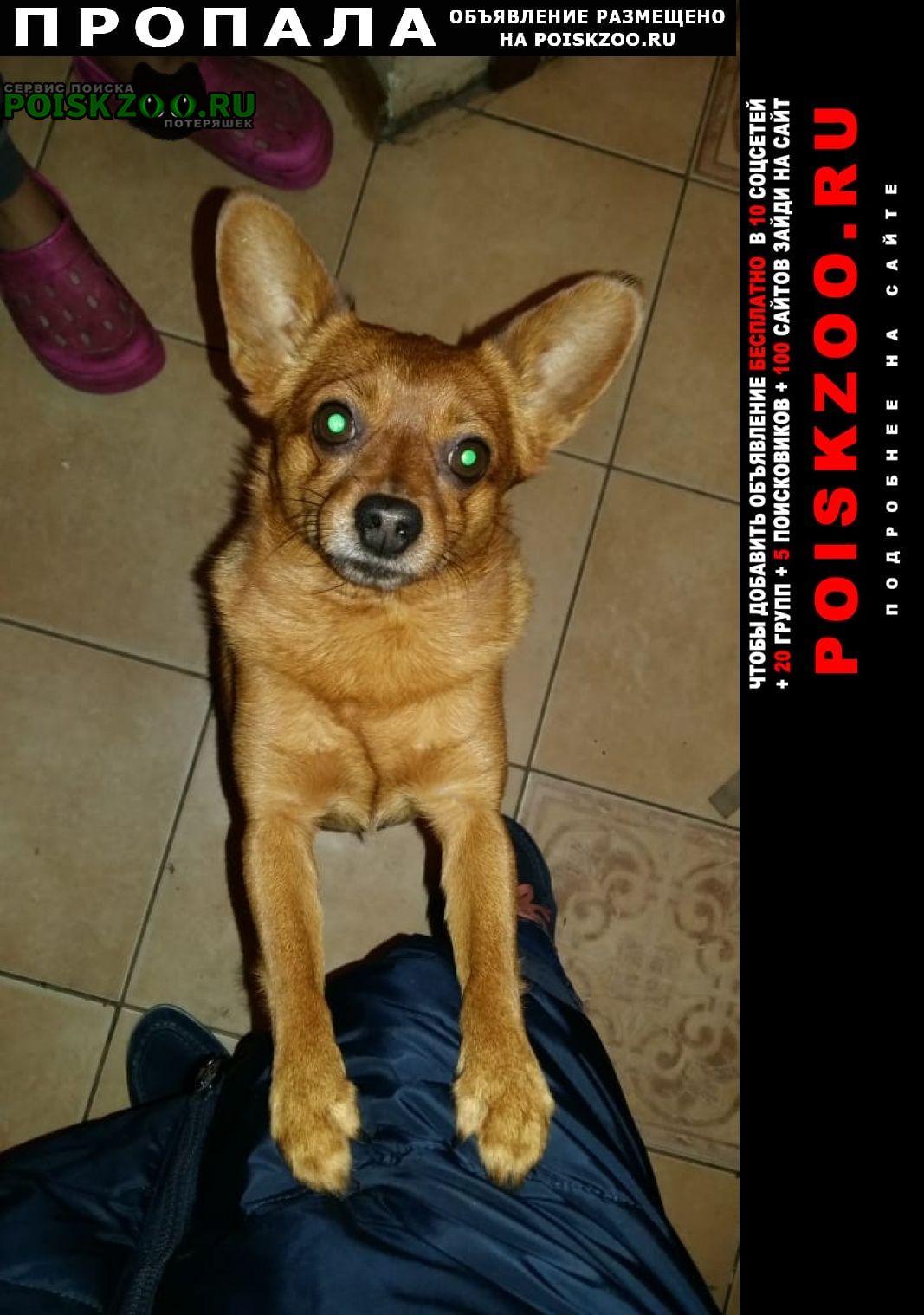 Пропала собака 15.02. в 18 часов Волосово