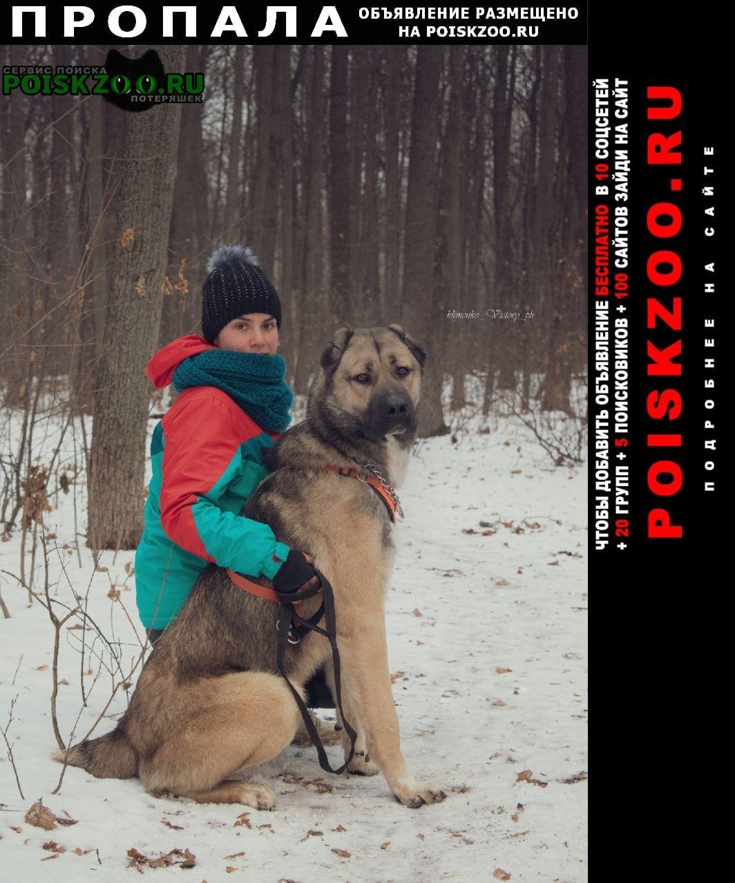 Воронеж Пропала собака украли и отдали