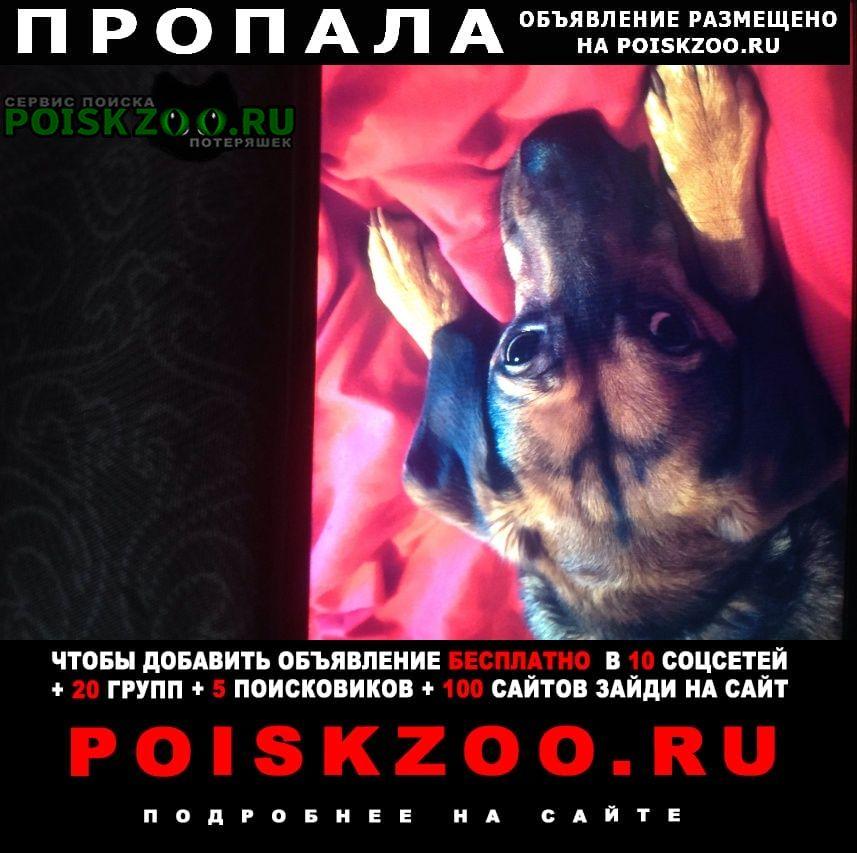 Пропала собака Ярославль