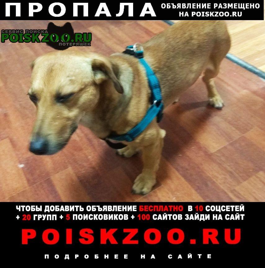 Пропала собака рыжик, южное бутово Москва